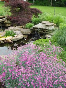 Water garden with landscape plants
