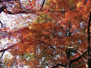 Tree branches and leaves with fall color
