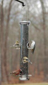 Birds at winter birdfeeder