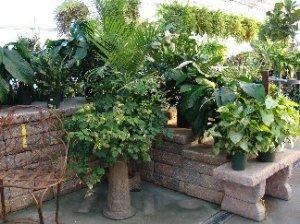 Houseplants in the greenhouse at Hillermann Nursery & Florist