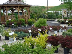 Hillermann Nursery & Florist - Nursery Lot