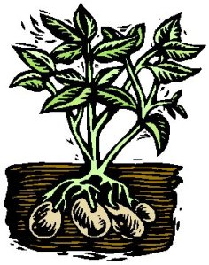 Potato plant graphic