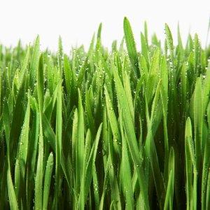 Grass-Blades-WaterDropsS