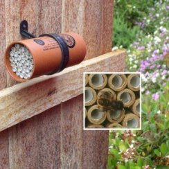 Bee-Orcon-Nest-Ws