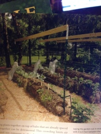 StrawBaleGarden-Rows