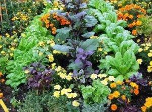 Vegetable-Herb-CompanionPlantingWcsw