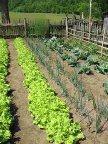VegetableGardenSs