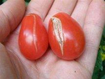 TomatoSplitSkinW