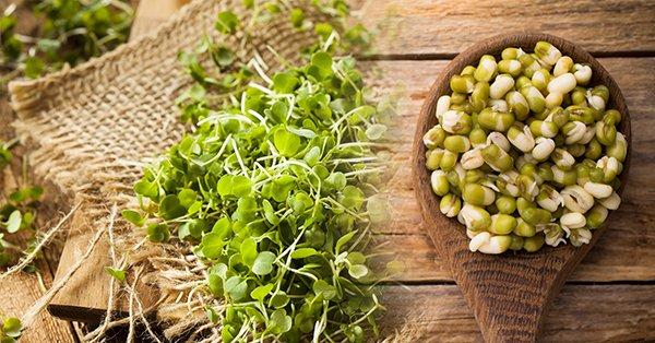 microgreens_sprouts_bi