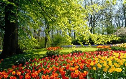 SpringTulipsTreeW