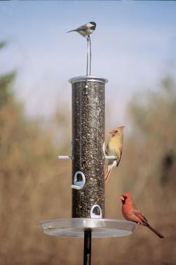 BirdsOnTubeFeederWeb