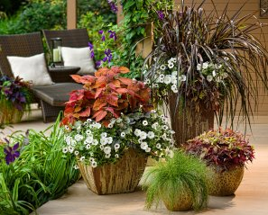 Container gardens with flowers on a porch - photo credit Proven Winners - www.provenwinners.com