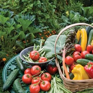 Vegetables-TableGarden